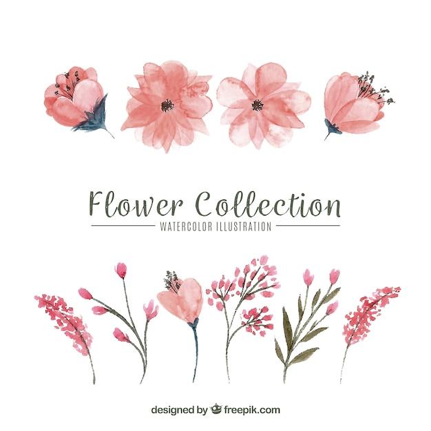 花のセット 無料ベクター