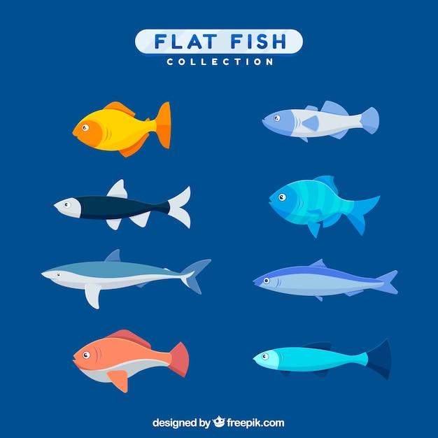 フラットスタイルのカラフルな魚のコレクション 無料ベクター