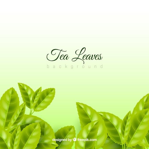 現実的な茶の葉の背景 無料ベクター