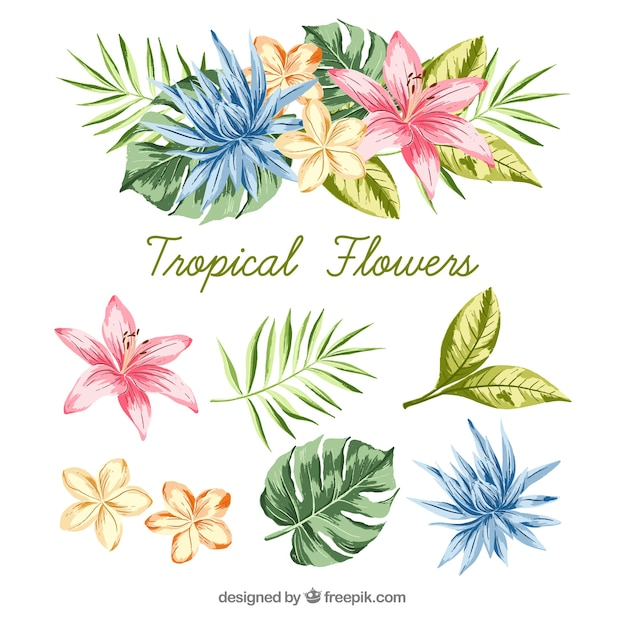 カラフルな熱帯の花の手描きセット 無料ベクター