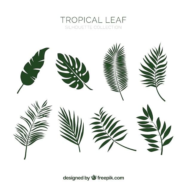 手描きの古典的な熱帯葉のコレクション 無料ベクター