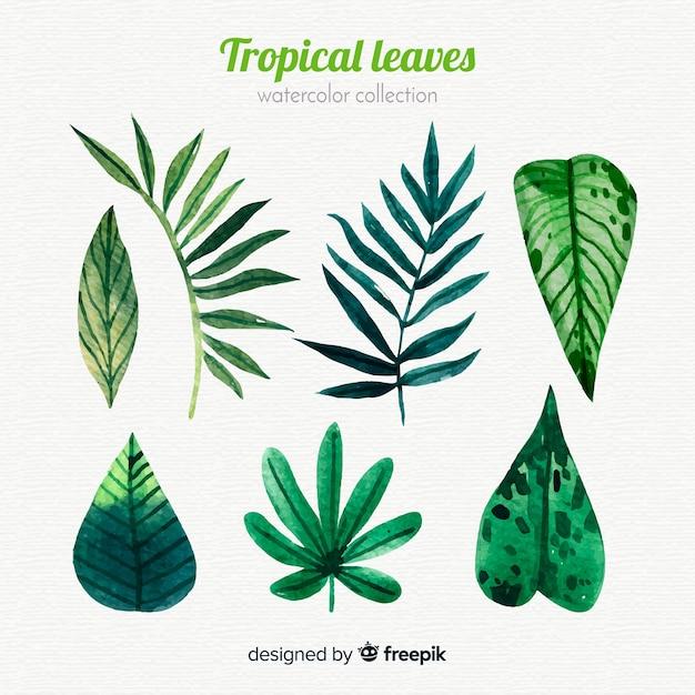 エレガントな水彩の熱帯の葉のコレクション 無料ベクター