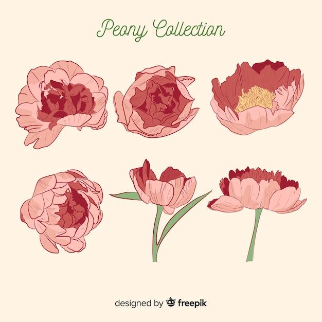 素敵な牡丹の花のコレクション 無料ベクター