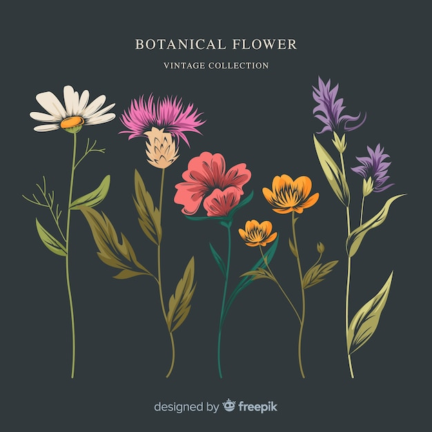 ビンテージ植物花コレクション 無料ベクター