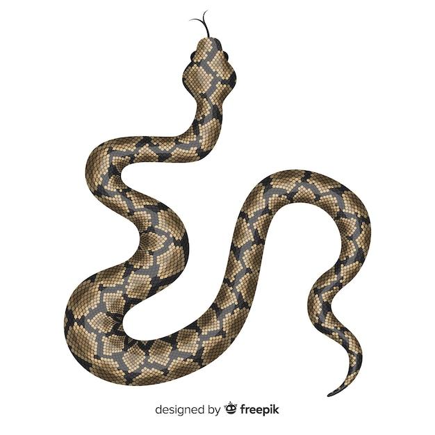 手描きのリアルなヘビのイラスト 無料ベクター