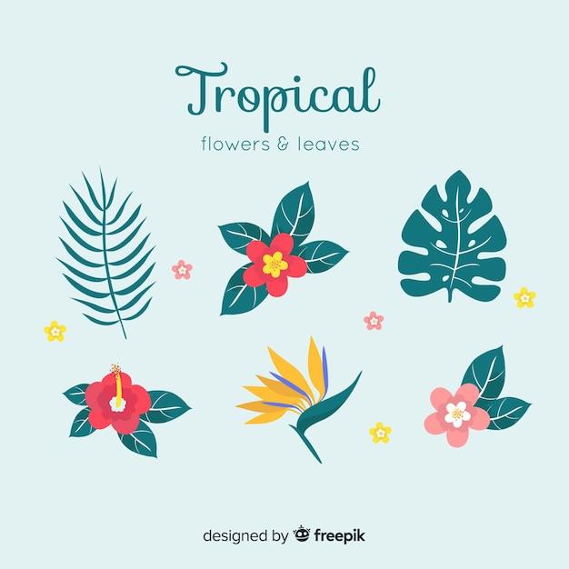 熱帯の葉と花のコレクション 無料ベクター