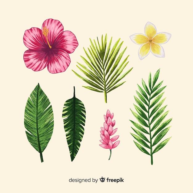 Ручной обращается тропические цветы и листья Бесплатные векторы
