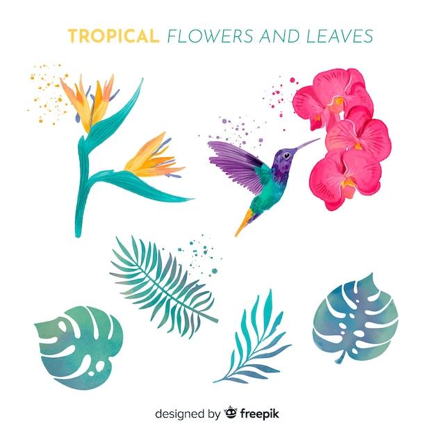 水彩の熱帯の花と葉 無料ベクター