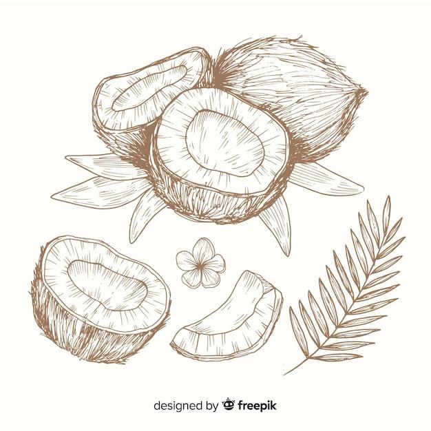 Бесцветная рисованной кокосовый фон Бесплатные векторы