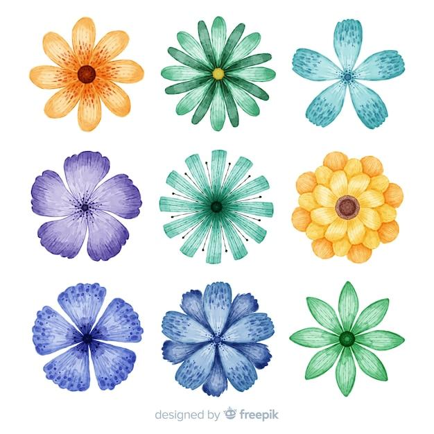 水彩のカラフルな花と葉のコレクション 無料ベクター