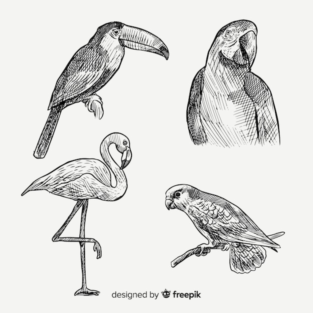 手描きのエキゾチックな鳥のコレクション 無料ベクター