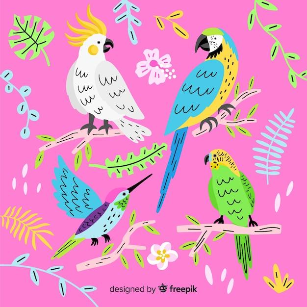 Коллекция рисованной экзотических птиц Бесплатные векторы