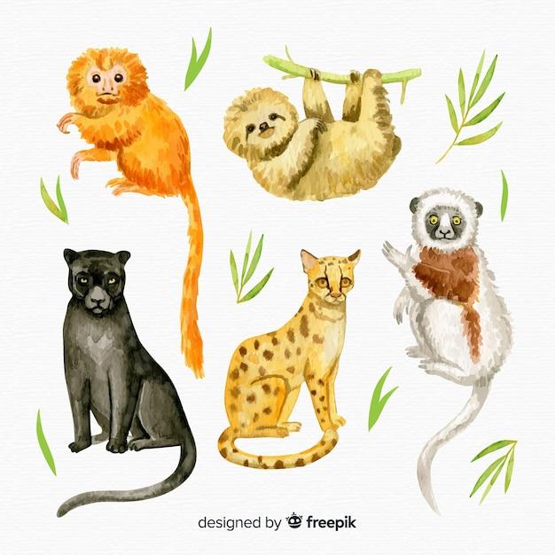Коллекция акварели экзотических тропических животных Бесплатные векторы