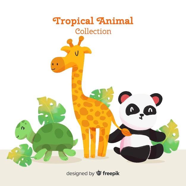水彩のエキゾチックな熱帯動物コレクション 無料ベクター