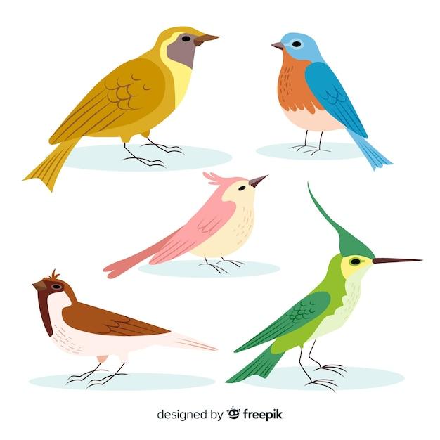 手描きのカラフルな鳥のコレクション 無料ベクター