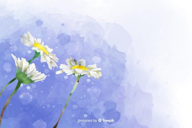 Красивая акварель ромашка цветочный фон Бесплатные векторы