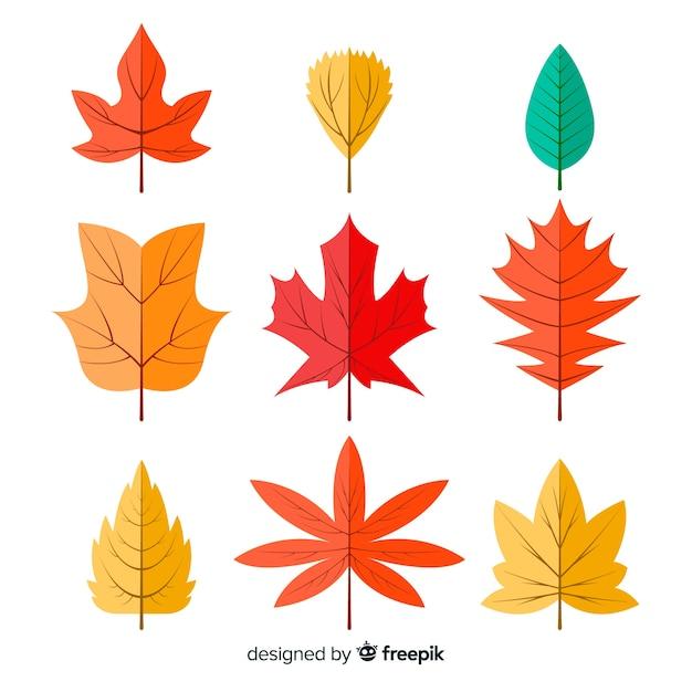 Коллекция осенних листьев плоский дизайн Бесплатные векторы