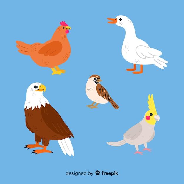 Красивая коллекция рисованной птицы Бесплатные векторы