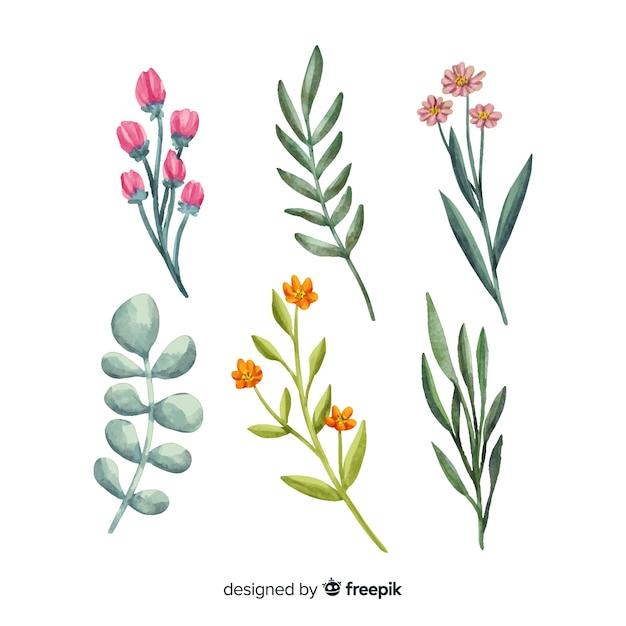 Набор акварели цветочные ветви Бесплатные векторы