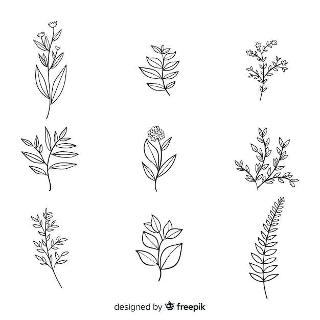 現実的な植物の花のコレクション 無料ベクター