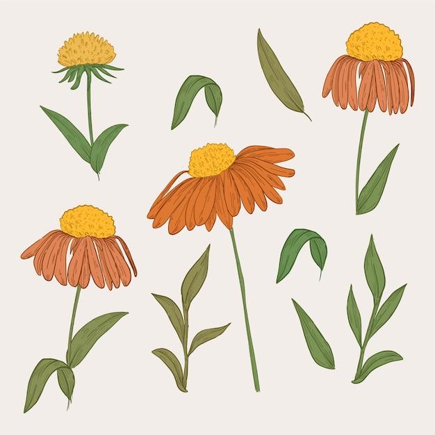 ヴィンテージ植物オレンジ花コレクション 無料ベクター