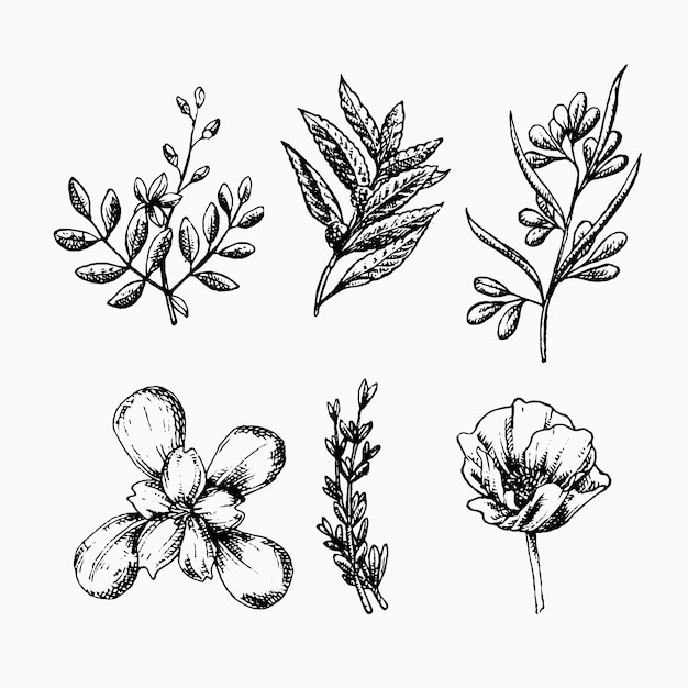 リアルな手描きのハーブと野生の花 無料ベクター