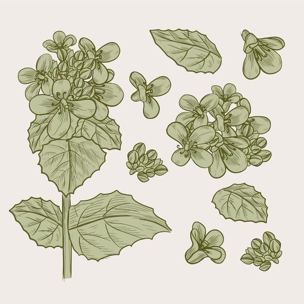 Ботанические травы и полевые цветы в винтажном стиле Бесплатные векторы