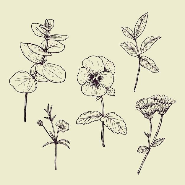 植物性ハーブとビンテージスタイルの野生の花 無料ベクター