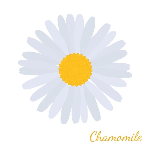 白いデイジーカモミール、ハーブ化粧品工場 Premiumベクター
