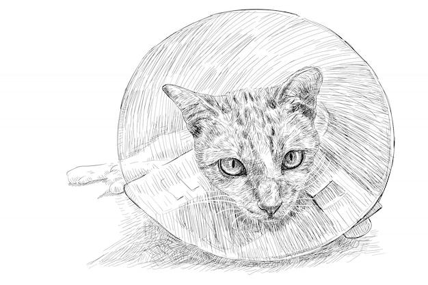エリザベス朝の首輪を着た猫の絵 Premiumベクター