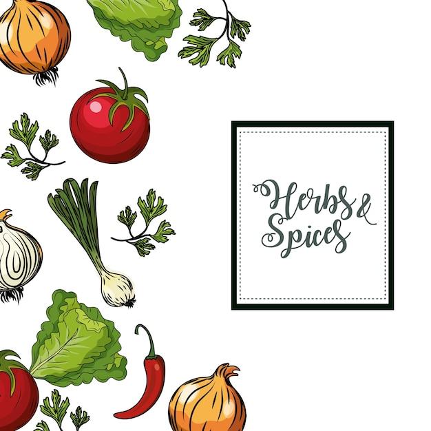 ハーブとスパイスの植物と臓器の食品の背景 Premiumベクター