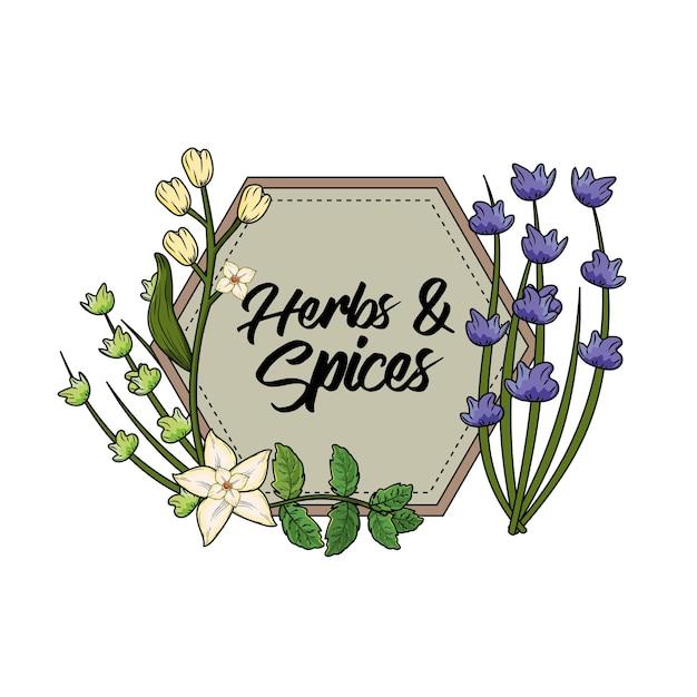エンブレムハーブとスパイス植物と器官の食べ物 Premiumベクター