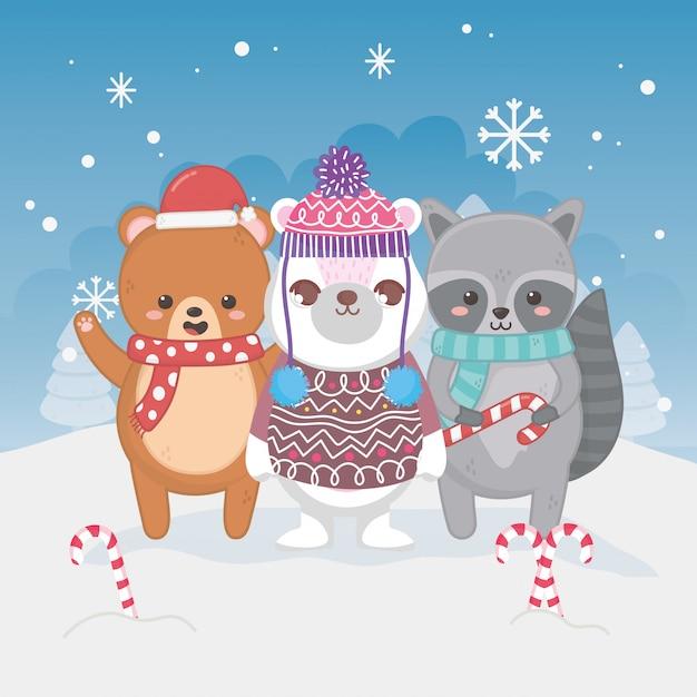 Милый белый медведь енот и леденцы тедди с рождеством Premium векторы