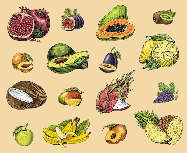 手描き、刻まれた新鮮な果物、ベジタリアン料理、植物、ヴィンテージオレンジとリンゴ、ココナッツ、ドラゴンフルーツ、梨、桃、プラムのブドウのセット。 Premiumベクター
