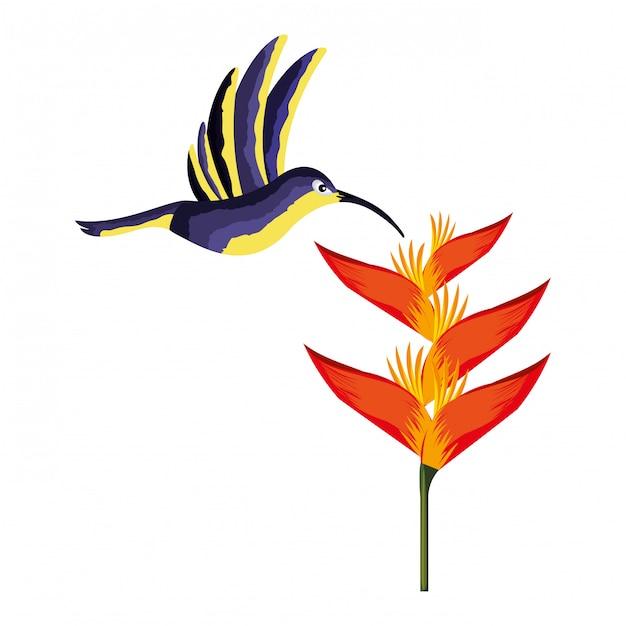 ハチドリ、鳥、花、熱帯 Premiumベクター