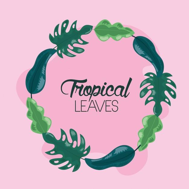フレーム熱帯の葉 無料ベクター