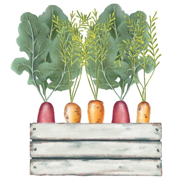手描きの木製の箱で鉛筆野菜 Premiumベクター