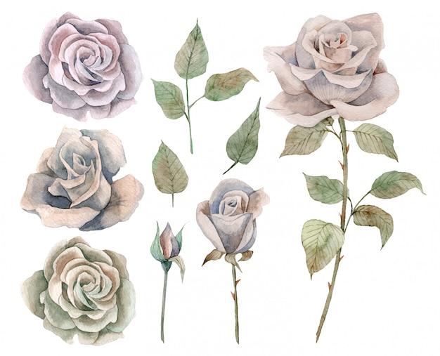 Ручной обращается акварель набор старинных роз и листьев Premium векторы