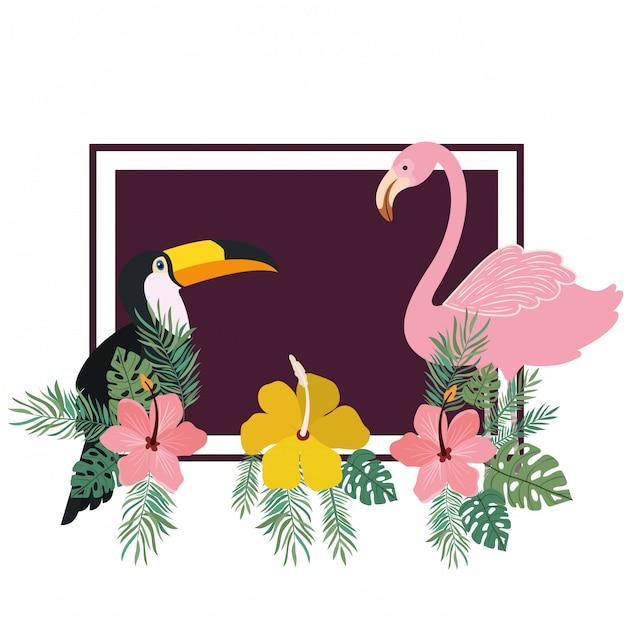 トゥカンとフランドルの夏の花のフレーム 無料ベクター