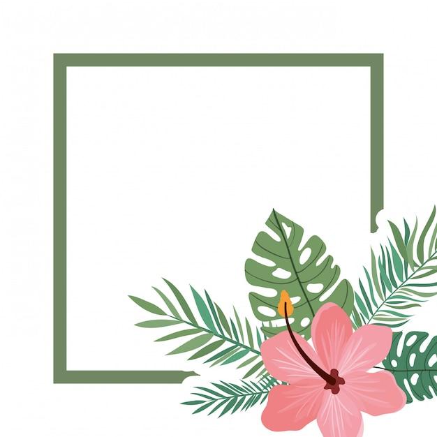 Рамка с цветком и листьями лета Premium векторы