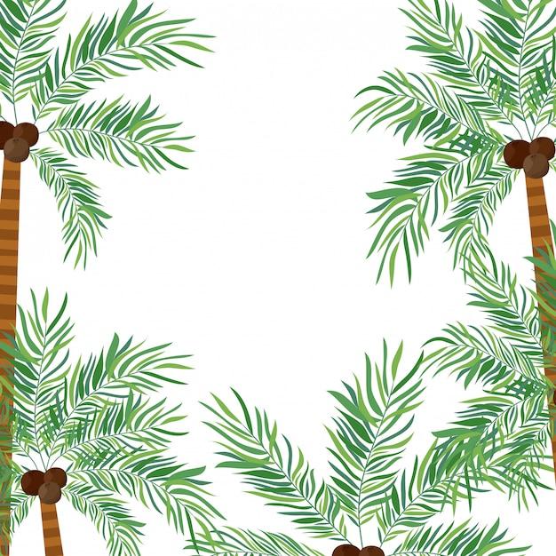 白い背景のココナッツとヤシの木 Premiumベクター