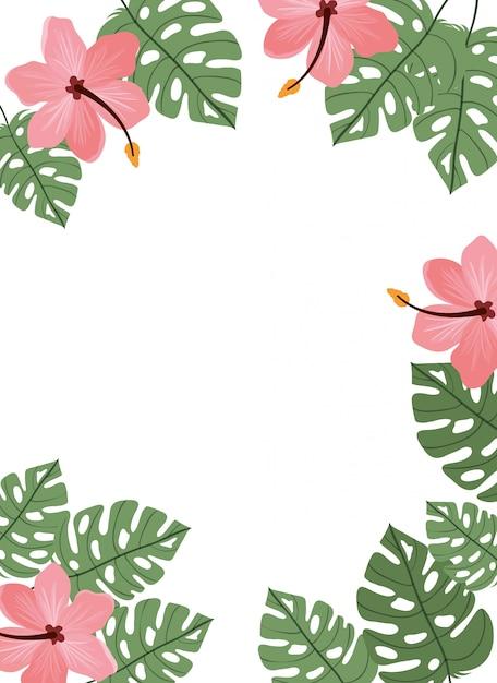 花と背景と夏の葉 Premiumベクター