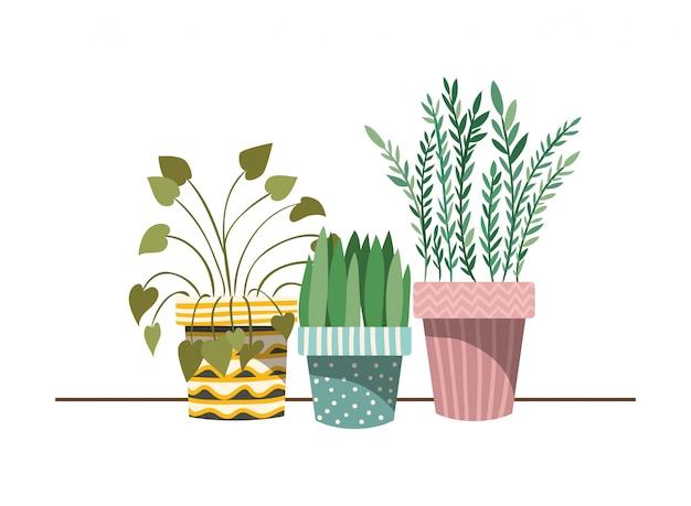 鉢植えの観葉植物 Premiumベクター