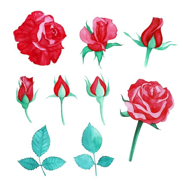 描かれた赤いバラの水彩画のセット Premiumベクター
