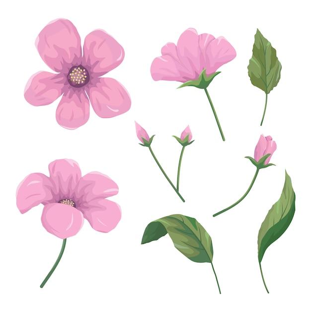 美しいピンクの花のセット Premiumベクター