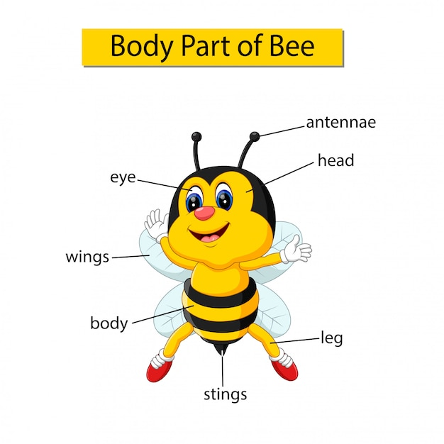蜂の体の一部を示す図 Premiumベクター