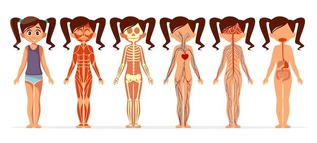 Анатомия тела девочки. мультфильм медицинской женской структуры человеческого тела мышечной Бесплатные векторы