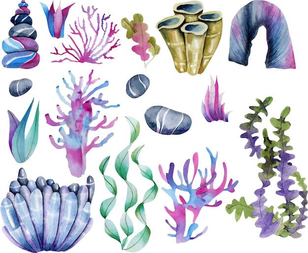 水彩の海藻と海の石のコリジョン Premiumベクター