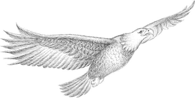 Черно-белый орел Premium векторы