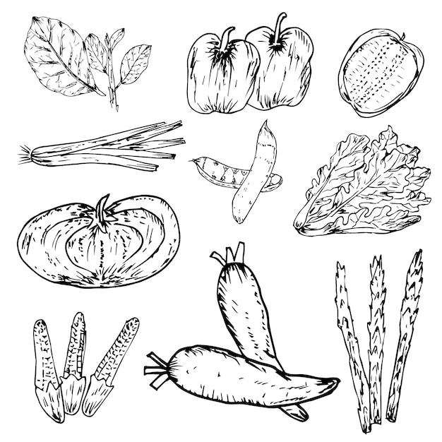 手描き野菜、有機ハーブやスパイスのセット、健康食品図面セット。 Premiumベクター